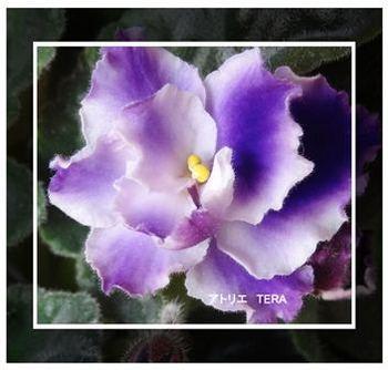 小さい花.jpg