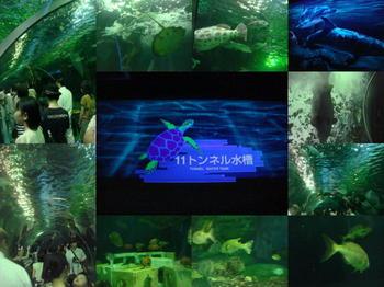 水族館の中1.JPG