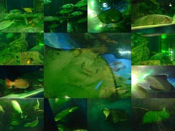 s-水族館3.jpg